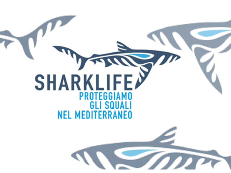sharklife logo2